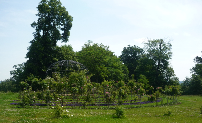 Der Rosengarten aus der Ferne. Mehrere halbrunde Reihen Blumen vor einem Netzpavillon an dem sie hinaufranken